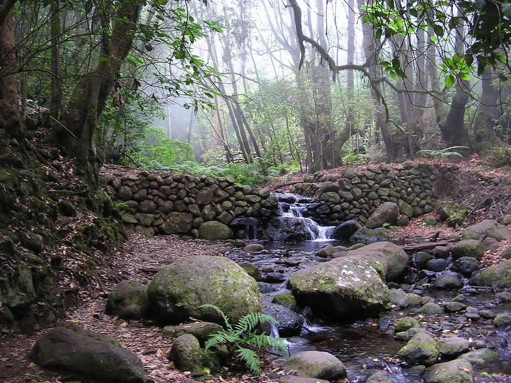 Bosque y Arroyo El Cedro Parque Nacional de Garajonay Isla de La Gomera Islas Canarias 0503