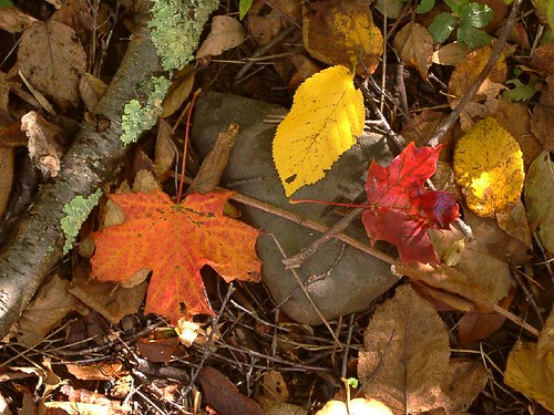 Fall Leaves Ground