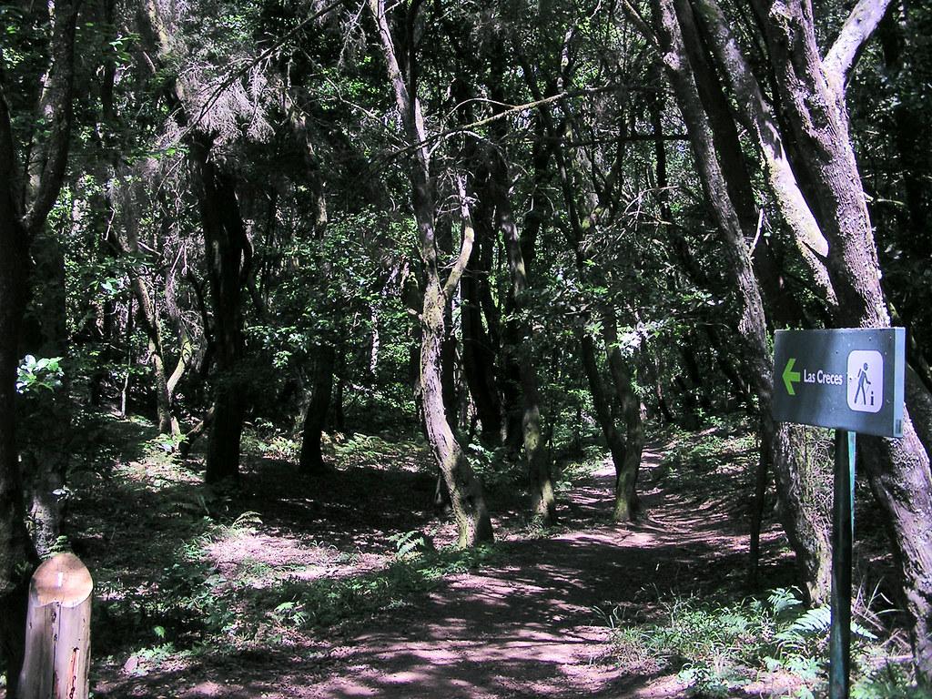 bosque de Las Creces Parque isla de La Gomera 12