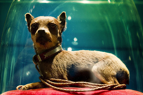Victorian Dog Taxidermy Jnaturalia Flickr