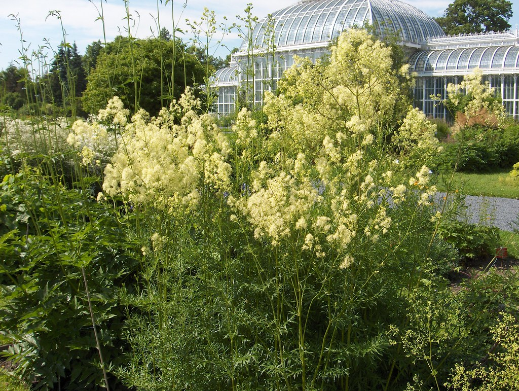 Studies In Herbaceous Plants Just Another Ubc Blogs Site Page 2