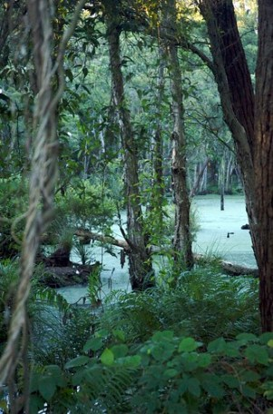 Spotlight on Threatened Tree Species at Lisarow Wetlands #Gosford #CentralCoast #Conservation Gaye Crispin with Coast Times News Central Coast