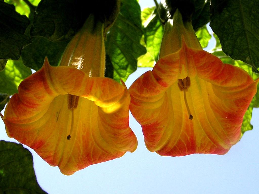Flores Gran Canaria 35