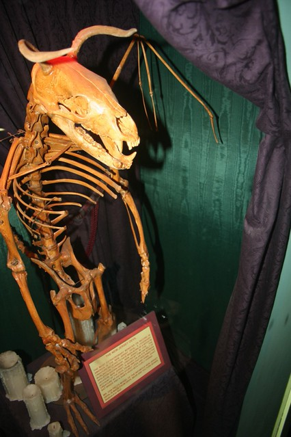 Jersey Devil Captured Found In Ripley S Museum On The