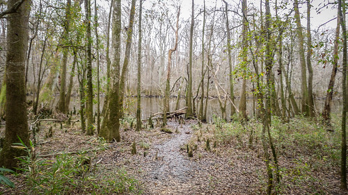 Congaree Swamp with Lowcountry Unfiltered-57