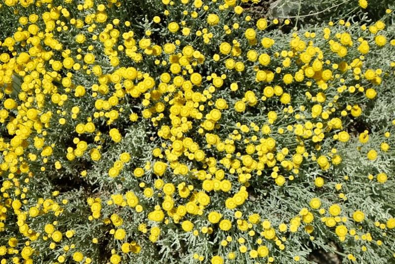 Pamukkale 8 - flowers