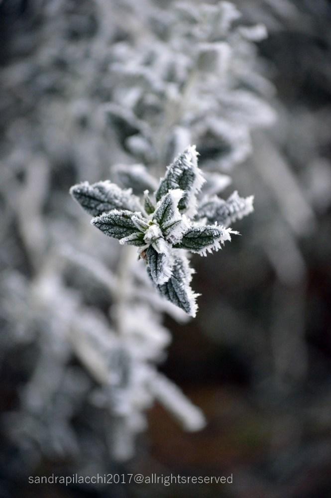 ghiaccio DSC_4452