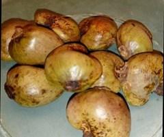 Cashew (with outer shell)/kacang mede masih berkulit