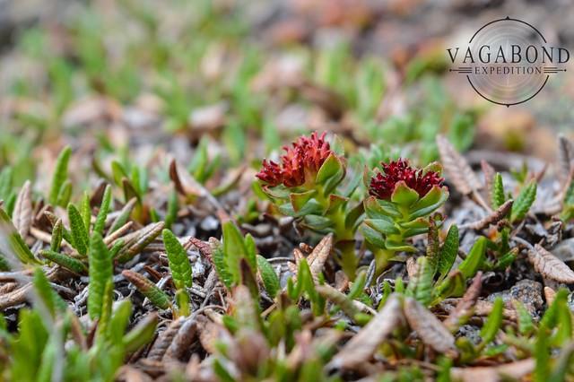 1024 - ve - flowers on mountain DSC_5600