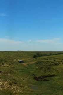 Where the green grass grows.