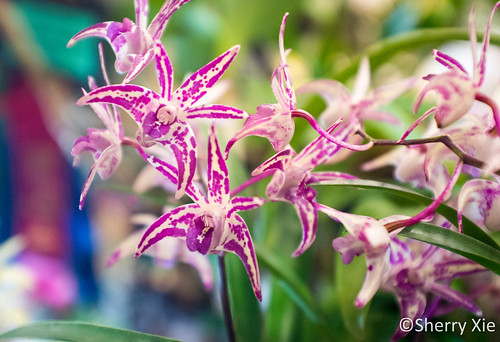 Toronto Orchid Show