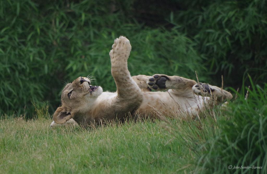 Zoo Tiffany Cincinnati Barnes