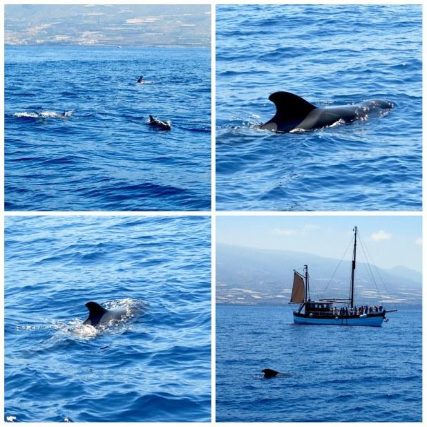 Cetaceos Tenerife