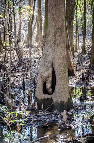 Congaree Swamp with Lowcountry Unfiltered-34