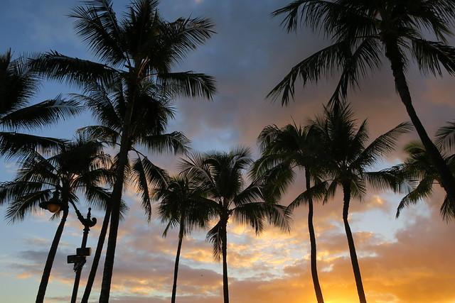 Hawaii, Palmuasema