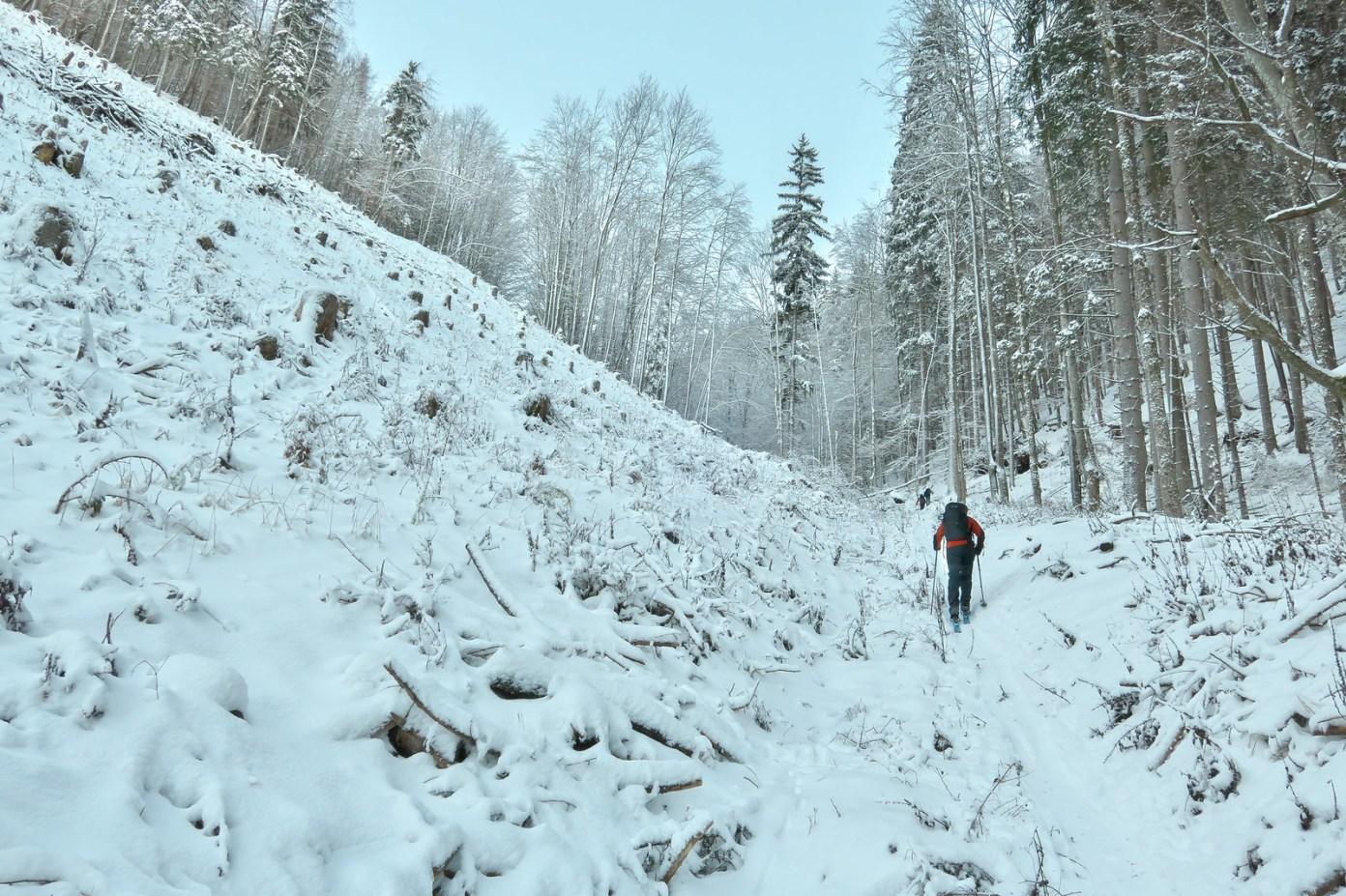 V dolní třetině údolí Sterngassl