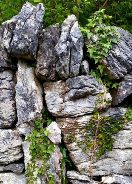 Stone wall and ivy