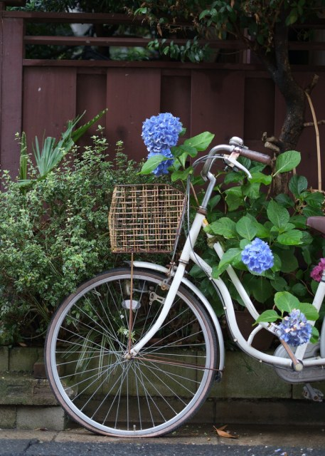 Hydrangea and bicycle 2015/06/19 XE104459