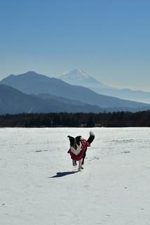 今日のうにぴょん 万全のスノーシュー態勢で臨んだが、雪不足でツボ足散歩に(^^;