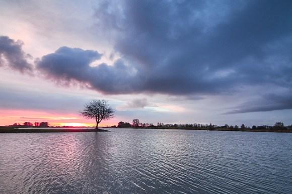 Tree at the river Lek 3
