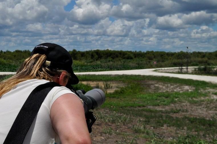 A visitor views an osprey along the Lake Apopka Wildlife Drive, Fla., May 31, 2015