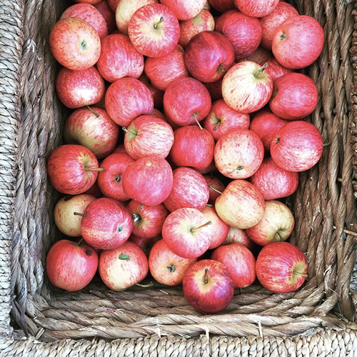 june bites… apples