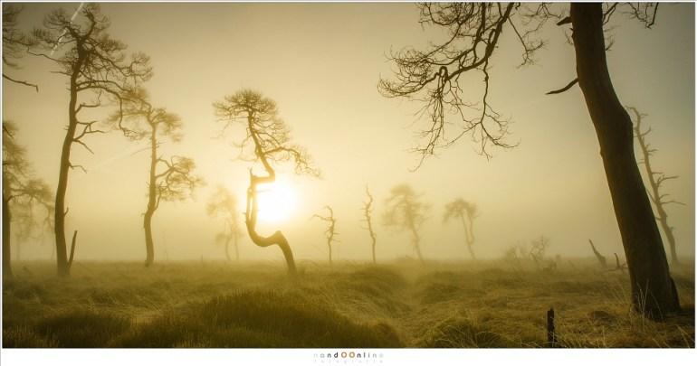 De zonsopkomst in een mistige, onwerkelijke wereld (24mm; ISO100; f/11; t=1/100sec; Lee soft GND0,9)