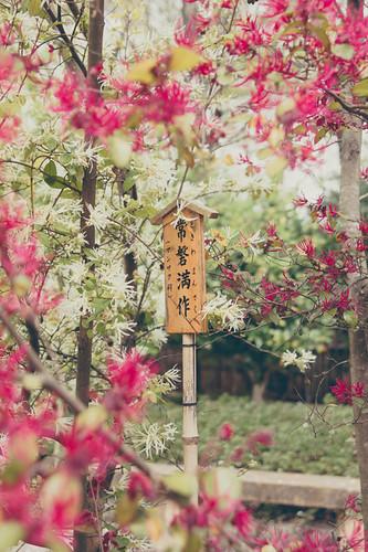 Kyoto Sights - Arashiyama