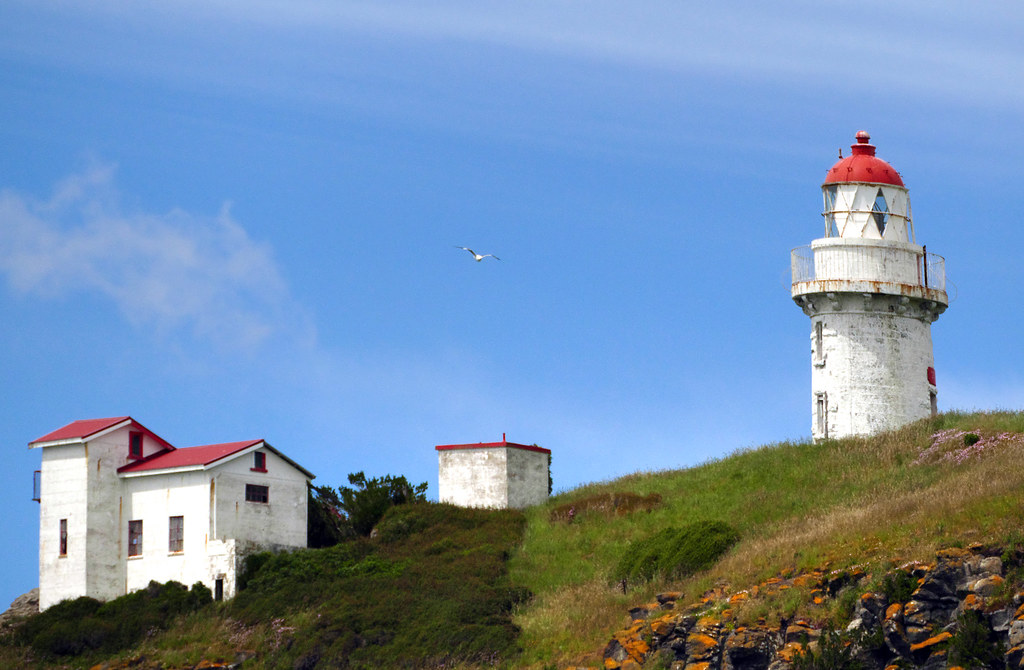 Taiaroa Head Lighthouse Otago Peninsula As You Make Your