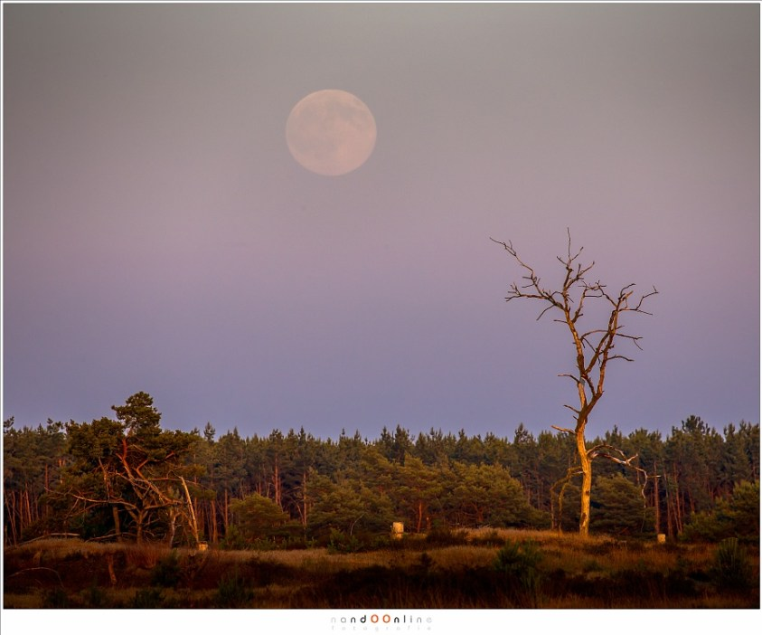 De Maan tijdens zonsondergang. Een supermaan... of toch niet? (400mm brandpunt; ISO400; f/8; t=1/400sec)