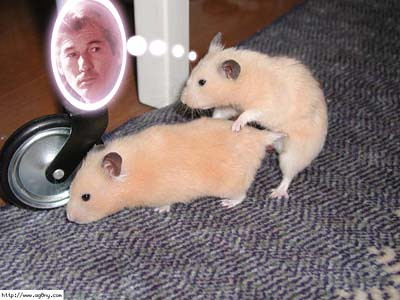 Hamster Porn By Punkindiana Hamster Porn By Punkindiana