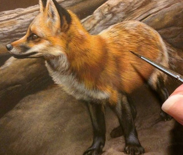 Red Fox In Progress  Watercolor On Board With Sterling