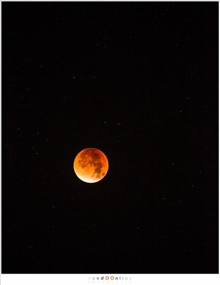 De totale verduistering: de Bloedmaan. Een hoge ISO garandeert dat er ook sterren op de foto komen. (ISO3200 - f/5,6 - 0,8sec - 400mm brandpunt)