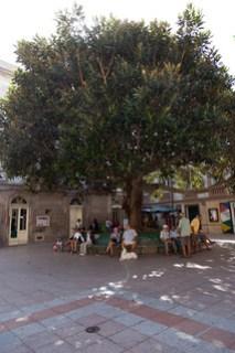 Rast auf der Piazza