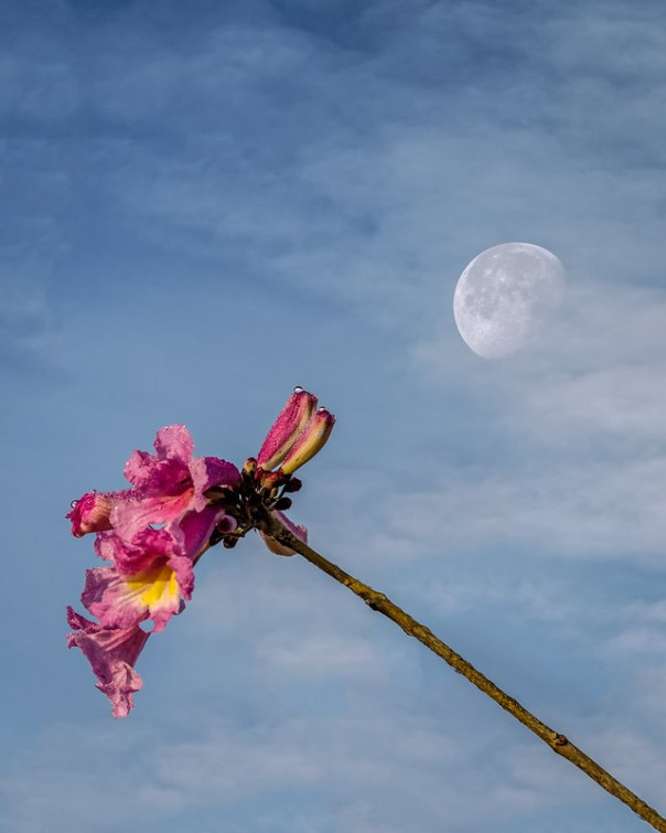 Moon, clouds, and flower