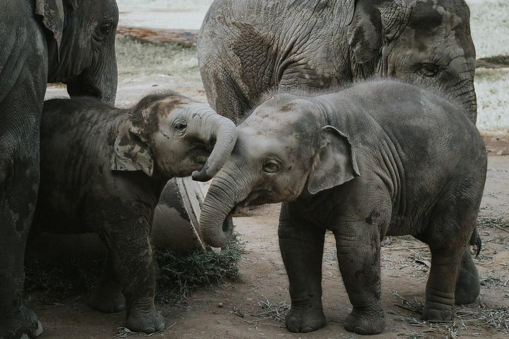 Marjaana_Tasala_Photography_Rimma_Elephant_Nature_Park_Seikkailijattaret-3