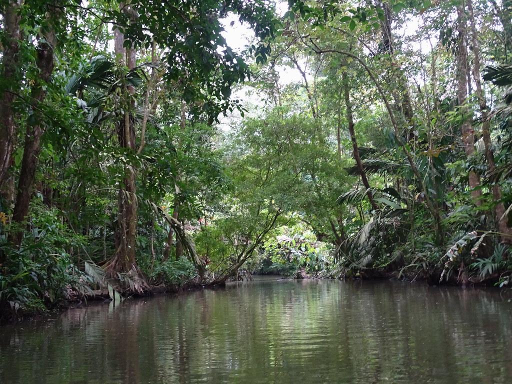 Recorrido en lancha Parque Nacional Tortuguero Costa Rica 11