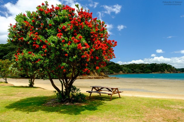 Bay Of Islands - Christmas Tree