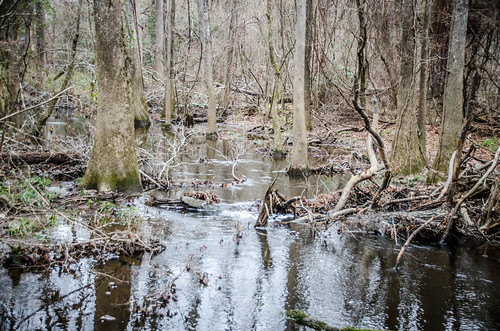Congaree Swamp with Lowcountry Unfiltered-18