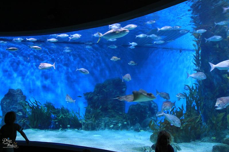 Over 50 Off SEA LIFE Melbourne Aquarium Ticket Deals
