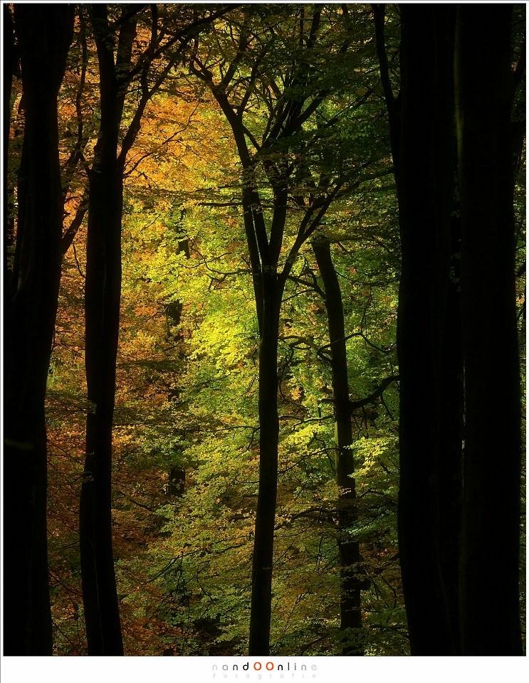 Herfstkleuren van groen naar bruin (ISO400, f/5,6, -1,3EV, 1/200, 200mm brandpunt)