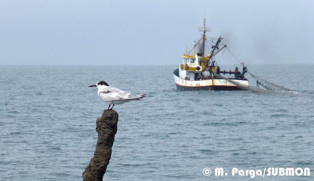 Tern and trawler