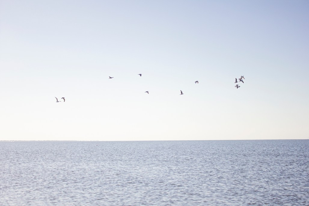 historic-delaware-lewes-beach-seagulls