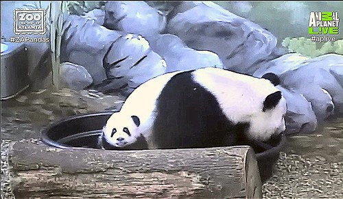 """Ya Lun: """"Mama brought me out to say Hewwo!"""" Capture 10:31 AM EST"""