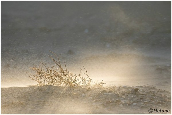 zonlicht in het opwaaiende zand