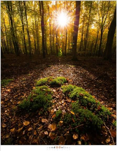 Een zonnige zondag in het door de herfst gekleurde Speulderbos. Gele herfstbladeren in de bomen, bruine herfstbladeren op de grond en mooi groen mos in het licht van het zonnetje (ISO800, f/16,  -1,3EV, 1/60sec, 11mm brandpunt)