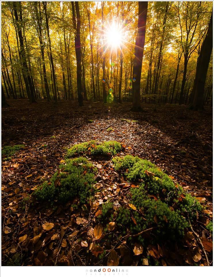Herfstkleuren op een zonnige zondag in het door de herfst gekleurde Speulderbos. Gele herfstbladeren in de bomen, bruine herfstbladeren op de grond en mooi groen mos in het licht van het zonnetje (ISO800, f/16,  -1,3EV, 1/60sec, 11mm brandpunt)