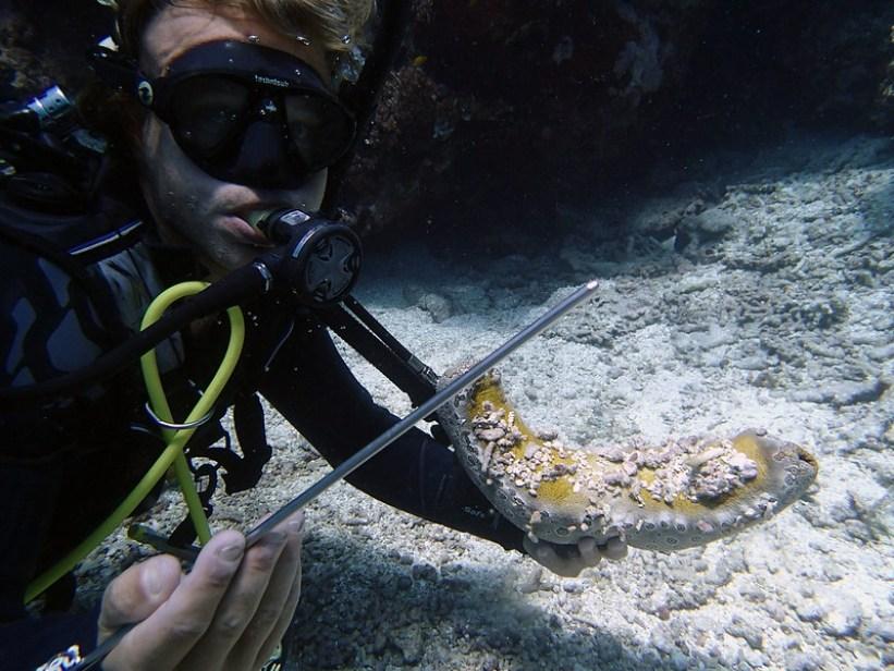Dykning på Great Barrier Reef