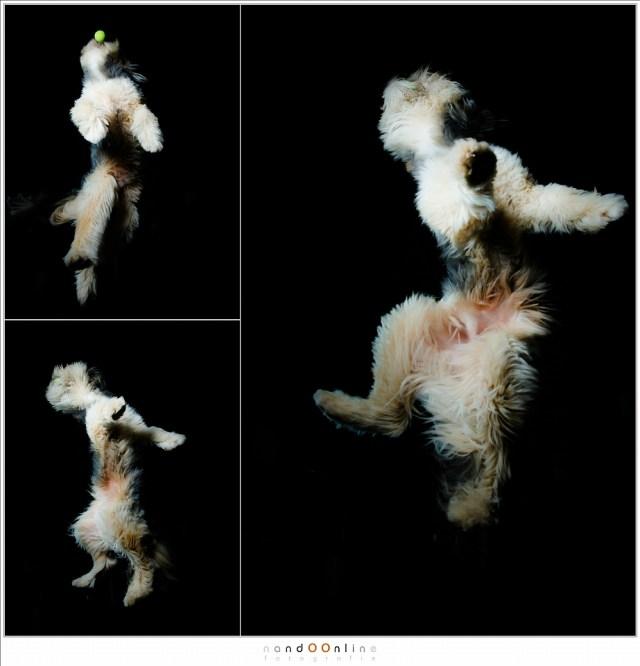 De hond Bruc in actie