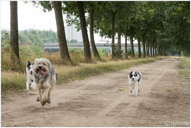 Samen heerlijk rennen